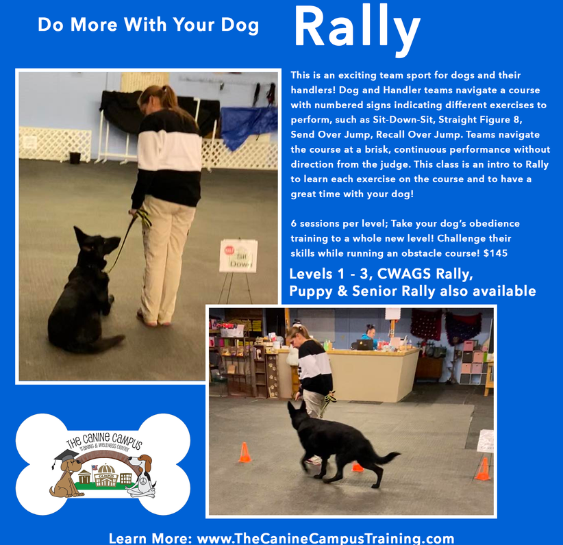 If you're looking for a fun class to get your active dog moving, sign up for Rally! With two locations in Hubbard and Howland, Ohio.