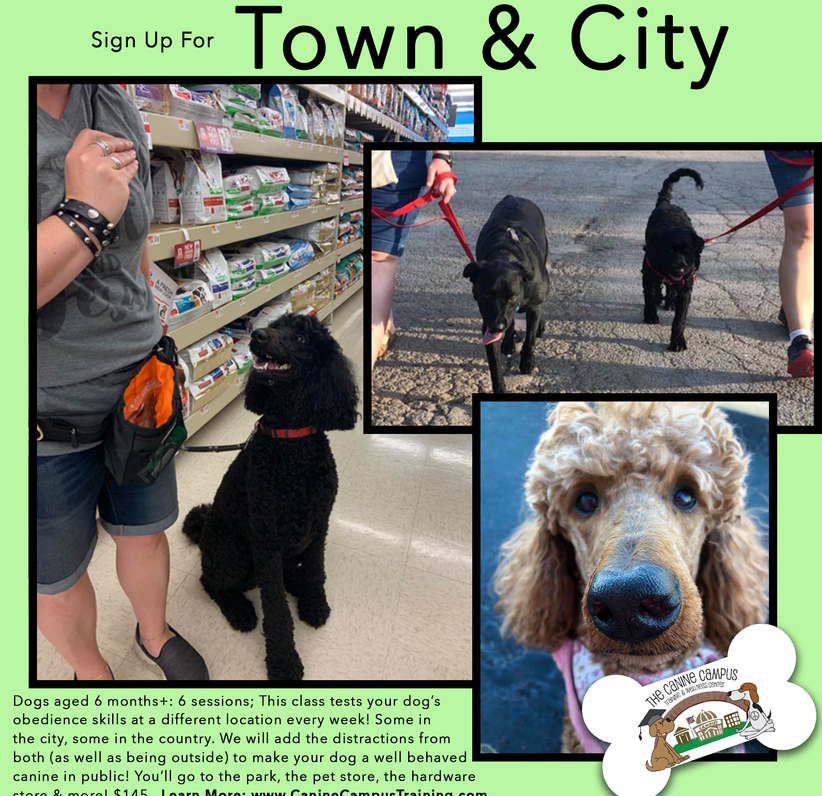 Take your dog anywhere! Sign up for Town and City classes and feel confident that your pup will always know what to do. With two locations in Hubbard and Howland, Ohio.