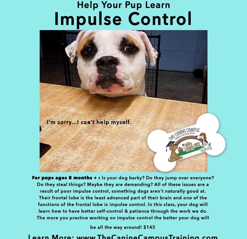 Help your pup learn Impulse Control with classes from The Canine Campus - in Hubbard, Howland - or in private lessons at your home!