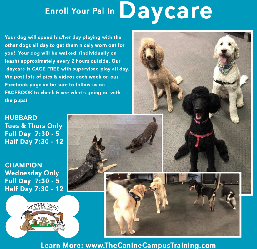 Yes - we offer Doggie Daycare at The Canine Campus in Hubbard and Howland, Ohio!
