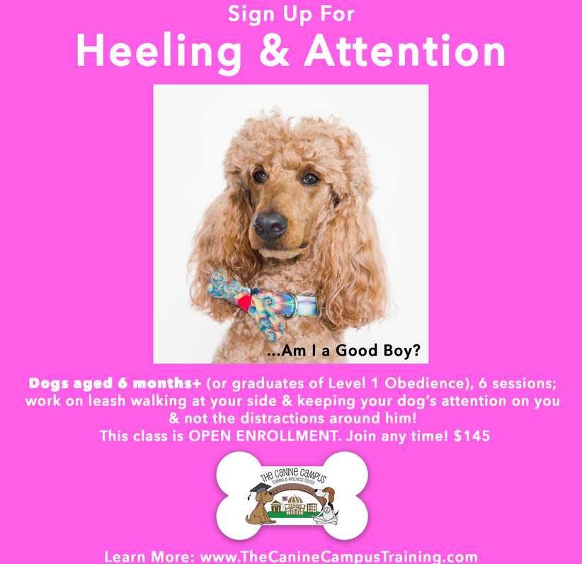 Sign up for Heeling and Attention classes at The Canine Campus - located in Hubbard and Howland, Ohio!