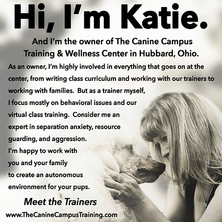 Katie Matola - Costello, owner of The Canine Campus in Hubbard and Howland Ohio