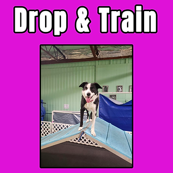 drop and train tile.png