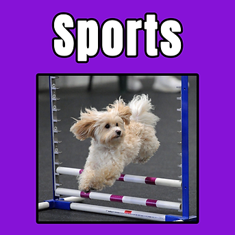 sports class tile.png
