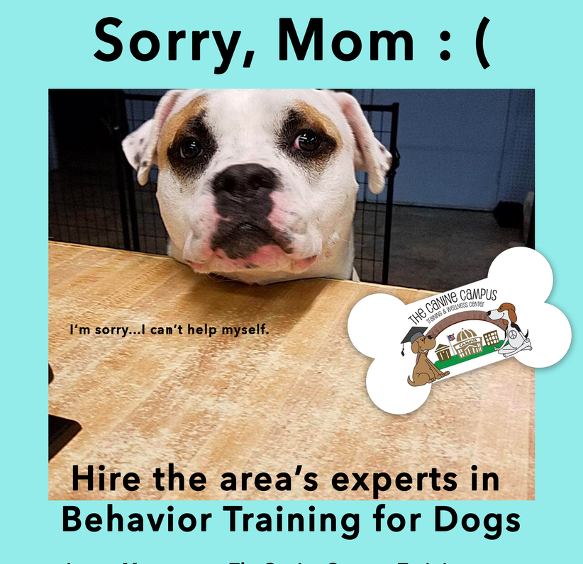 Hire the area's experts in Behavior Training for dogs from The Canine Campus - located in Hubbard and Howland Ohio!