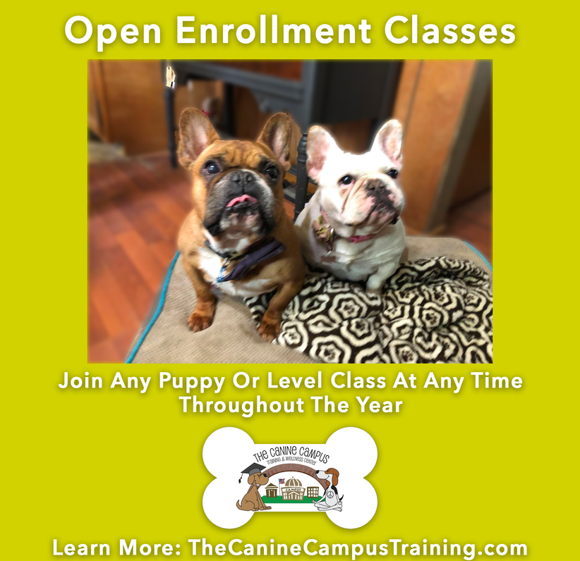 The Canine Campus in Hubbard and Howland offers Open Enrollment for Puppy and Obedience classes!