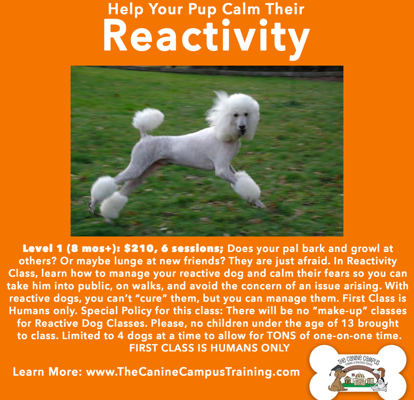 If you have a dog that barks or growls at everything that moves, this class might be for you! Call The Canine Campus - with locations in Hubbard and Howland, Ohio!