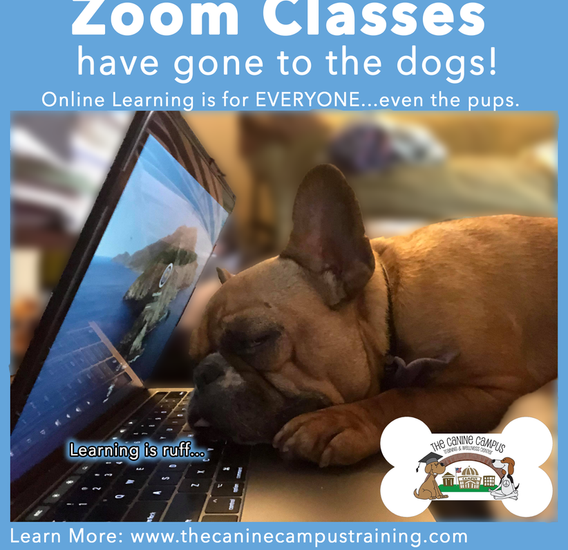 Sign up for our online classes ANYWHERE through The Canine Campus!