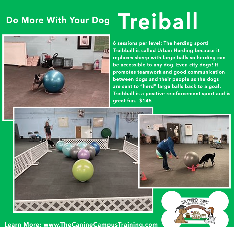 Does your dog try to herd things? Sign him p for Treiball! With two locations in Hubbard and Howland, Ohio.