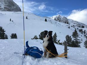 Hundestaffel - Winterkurs I