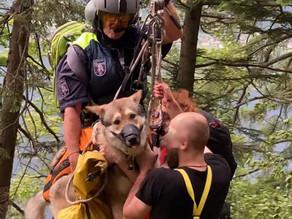 Hund vereitelte terrestrische Bergung vom Hirlatz