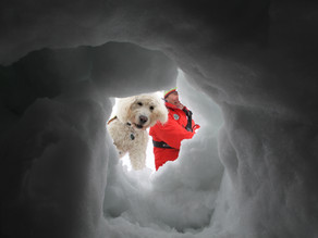 Lawinen & Suchhunde Winterkurs II