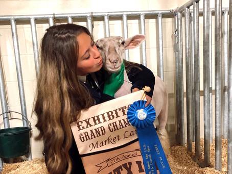 Katy ISD FFA Livestock Auction Brings in Over $581K