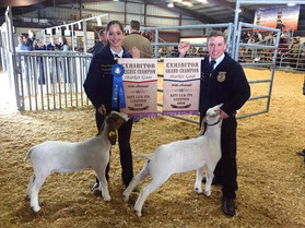 77th Livestock Show & Rodeo Returns to Katy