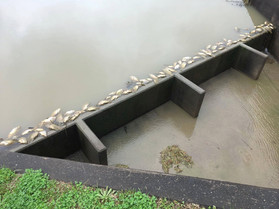 Hundreds of Dead Fish In Katy-area Bayous, Drinking Water Safe