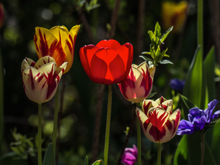 THE BEAUTY OF THE FLOWERS OF DIVERSITY