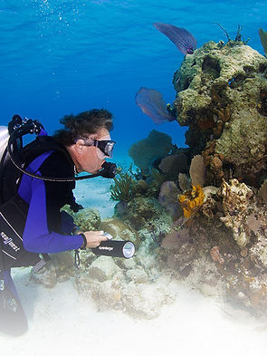Diving_01.jpg