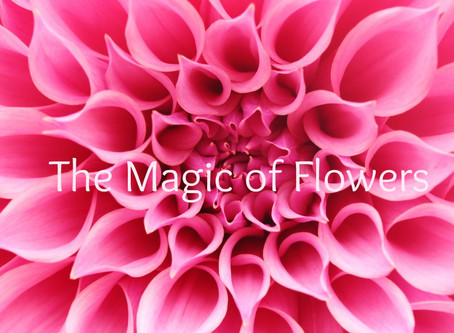 The Magic of Flower Remedies