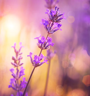 flower essence consultation