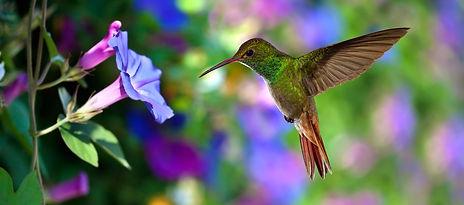 inspirational hummingbird