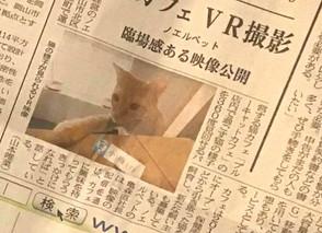 《掲載情報》 山陽新聞さまにて「猫カフェ体験VR」