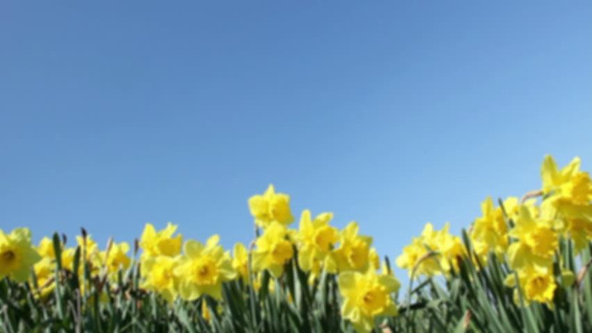 spring background for website.jpg