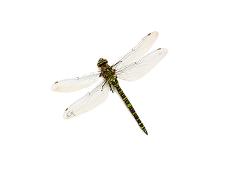 Just Dragonfly_edited.png