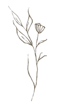 Leaf-9-PNG.png