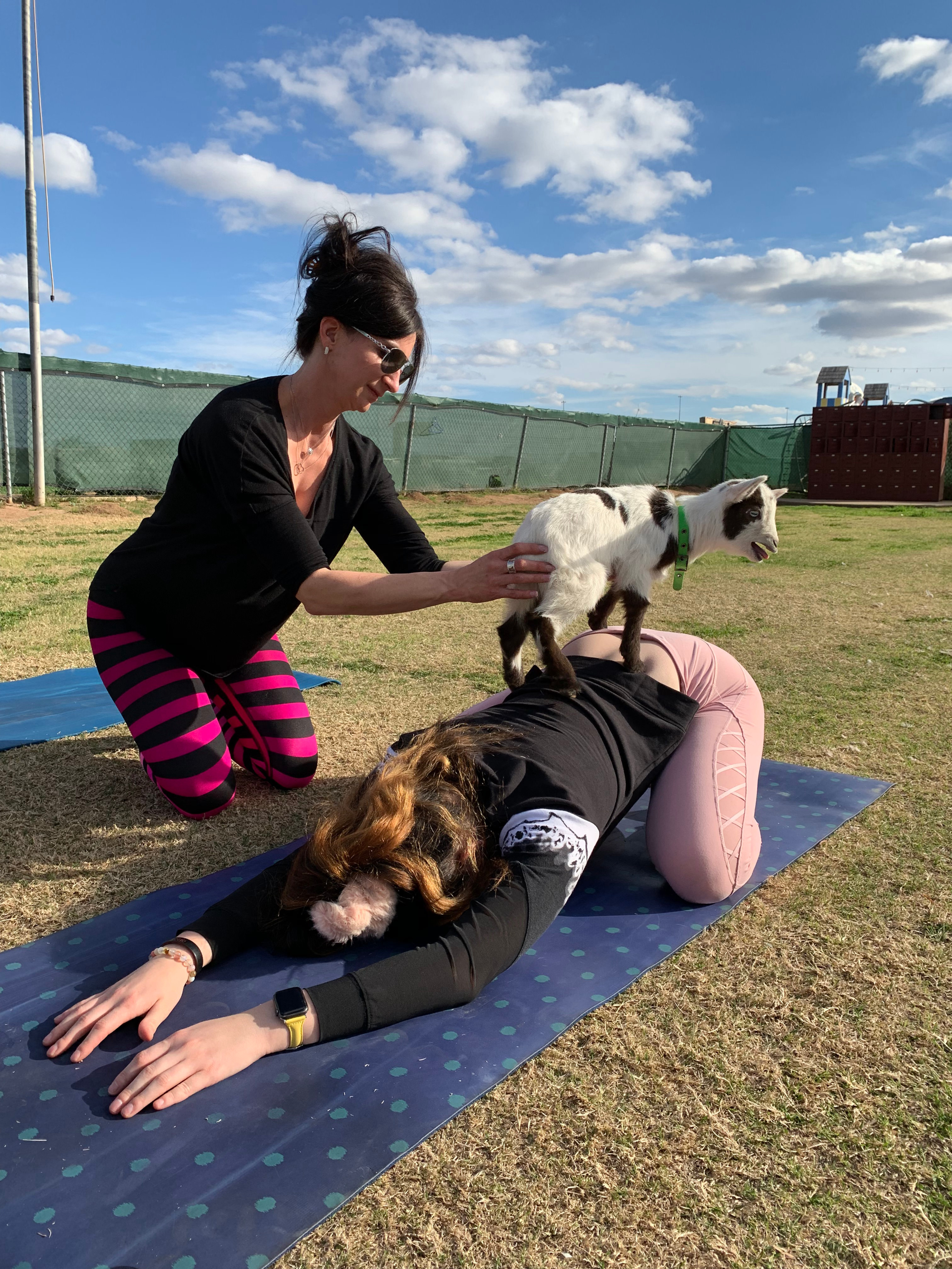 GOGA: Yoga with Goats!