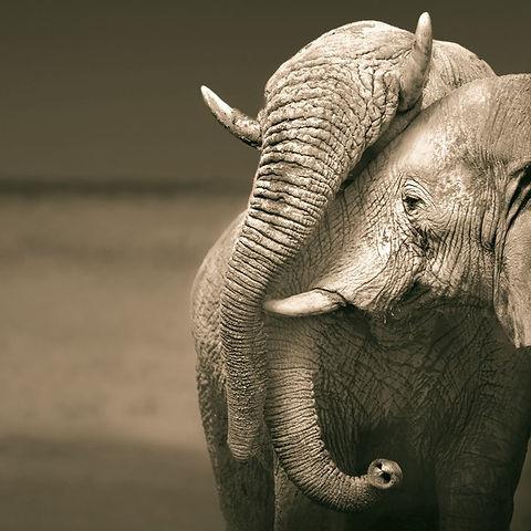 Elephant%20Love_edited.jpg