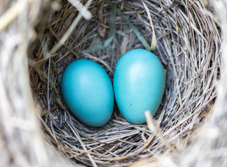 Episode 15: Empty Nest or Full Nest with guest Laura Thomas