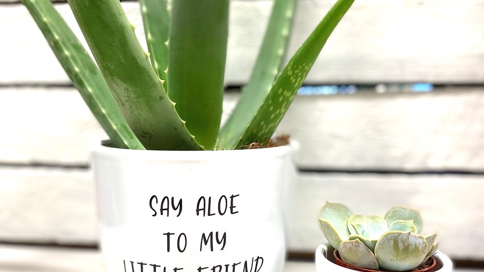 Aloe and friend duo pots