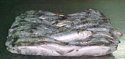 Sardinas congeladas.jpg