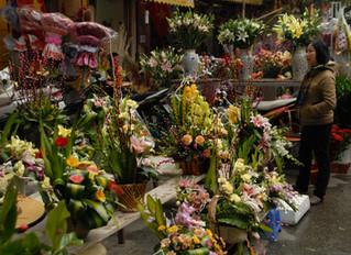 Flowers for Tết