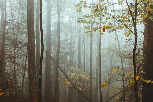 Autumn fog in the Smokies
