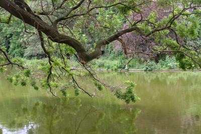 tree_park.jpg