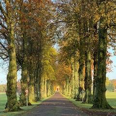 Driveway, Royal Agricultural University