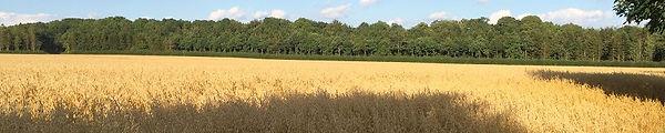 CBR Field.1082.0054 r25.jpg