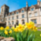 Daffodils at the Royal Agricultural University