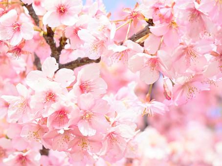 春のよしむねまつり特設サイト開設しました!