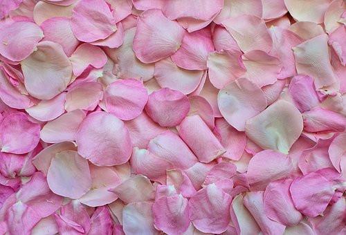 rose-petals-3194062__340.jpg