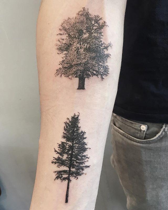 Trees for Chris 🌲_._._._._._._._._