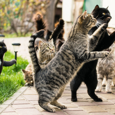 Pet cats NWBRHC