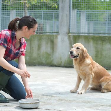 Pet dog NWBRHC