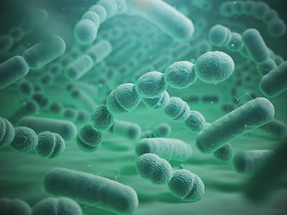 Pneumonococcal bacteria NWBRHC