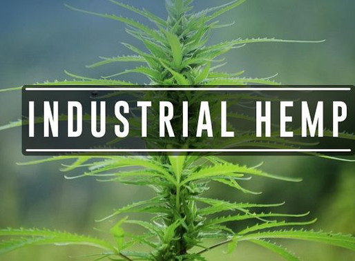 USDA Approves Tribe's Industrial Hemp Code