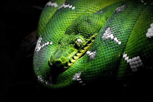 Snake in Raja Ampat.jpg