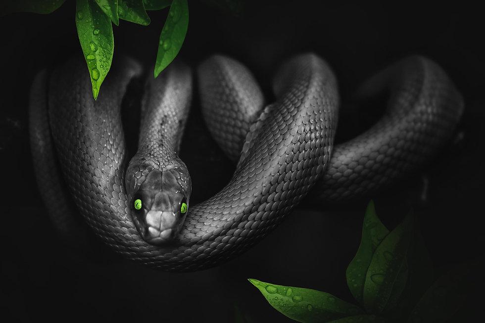 snake black green.jpg