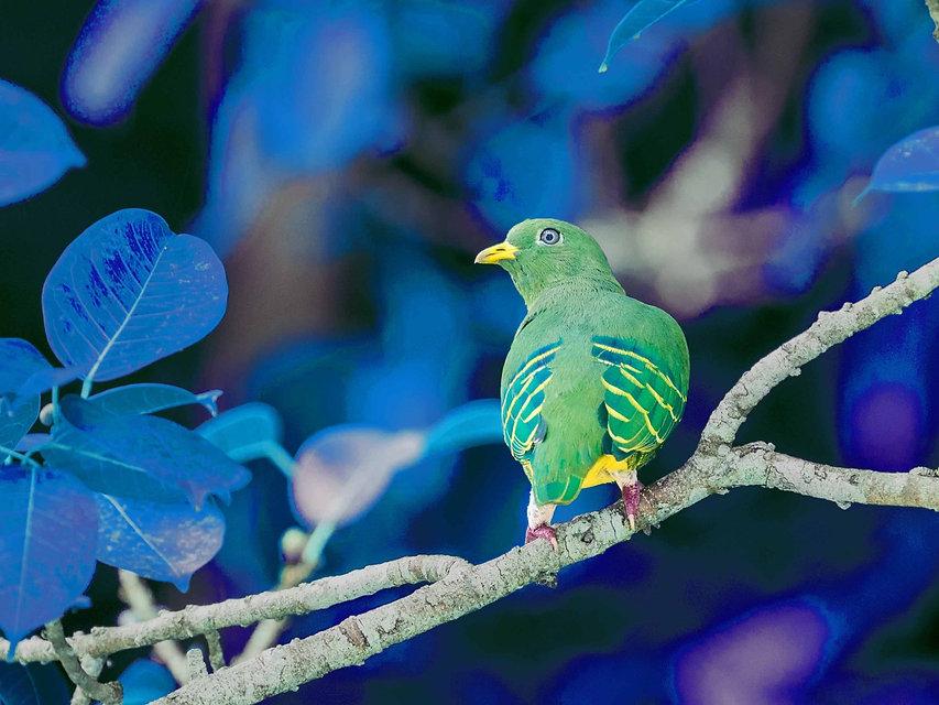 Colorshift - Bird 2160_edited.jpg