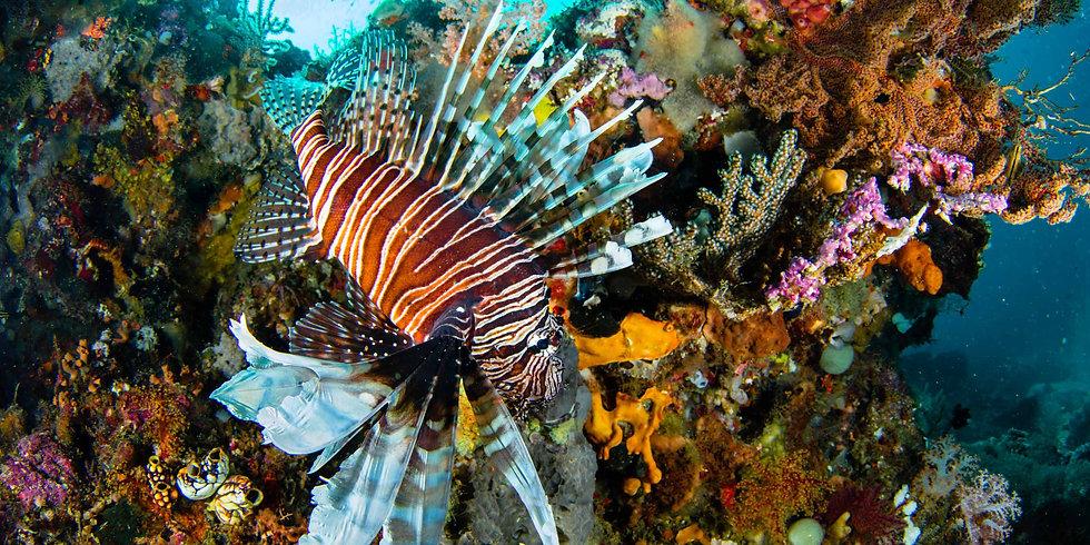 Raja Ampat Activities - 2-1 - Diving.jpg